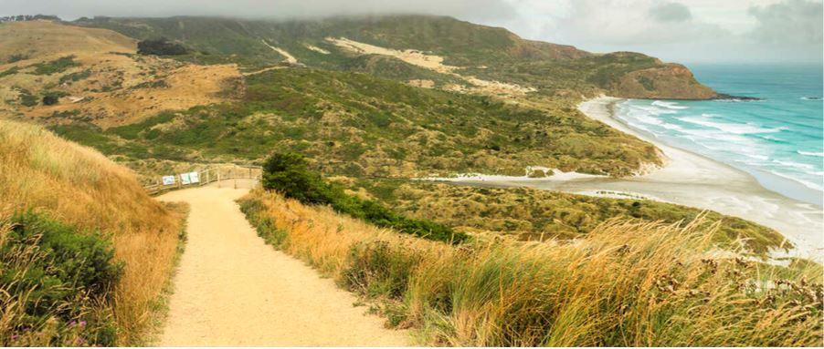 A hiking track along Sandfly Bay beachfront.