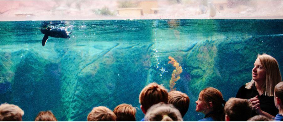 childrenwith teacher watching penguin swim