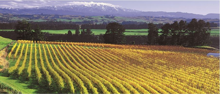 beautiful vineyard with lush green fields and snow capped mountain in the background