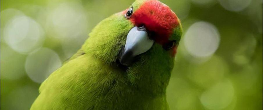 green bird with head tilt