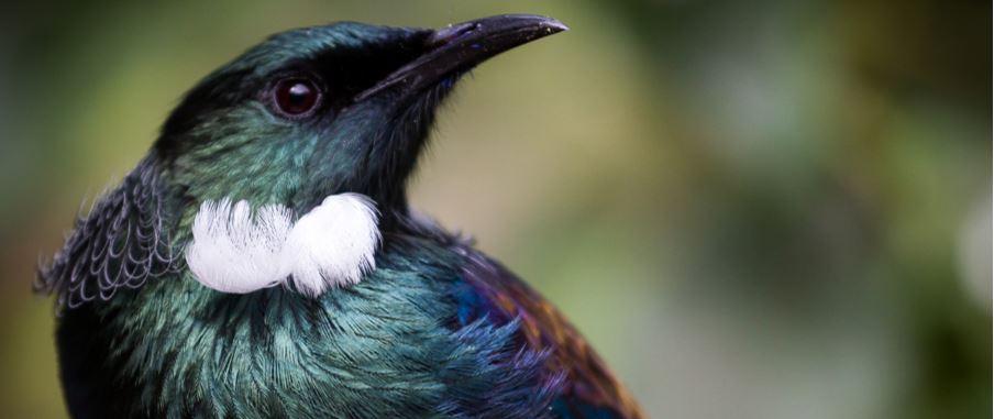 beautiful looking black bird in the wild